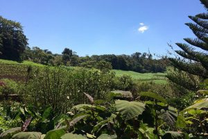 Nicaragua reisen miraflor