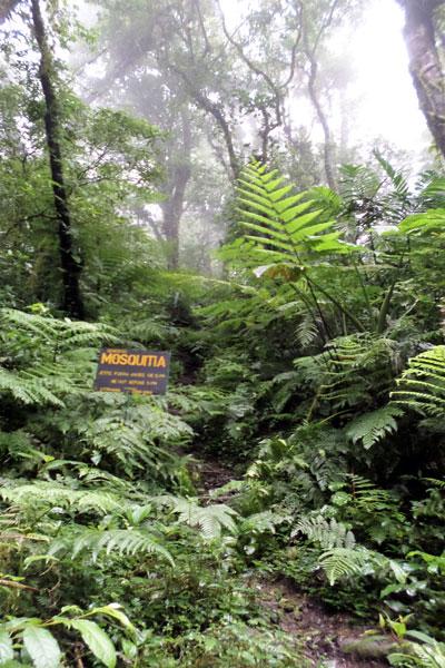 Nicaragua Kaffee Regenwald