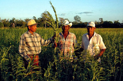 Nicaragua Reisen - Themenreise Fairer Handel