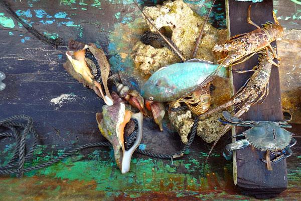 Pearl Lagoon Nicaragua Gerichte