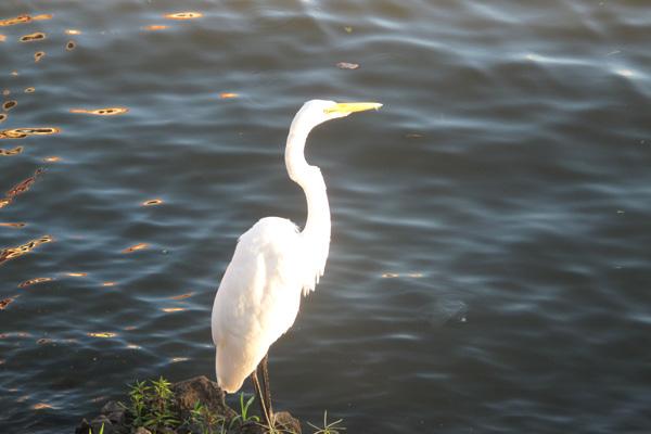 Vogel Rio San Juan Nicaragua